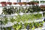 round pipe ntf aquaponics hydroponics